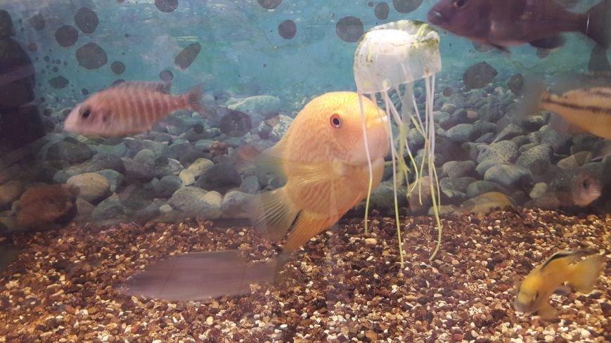 Эксклюзивные рыбки по выгодным ценам и бонусная программа: магазин «Зоомир» в Полоцке приглашает в мир аквариумистики, фото-4