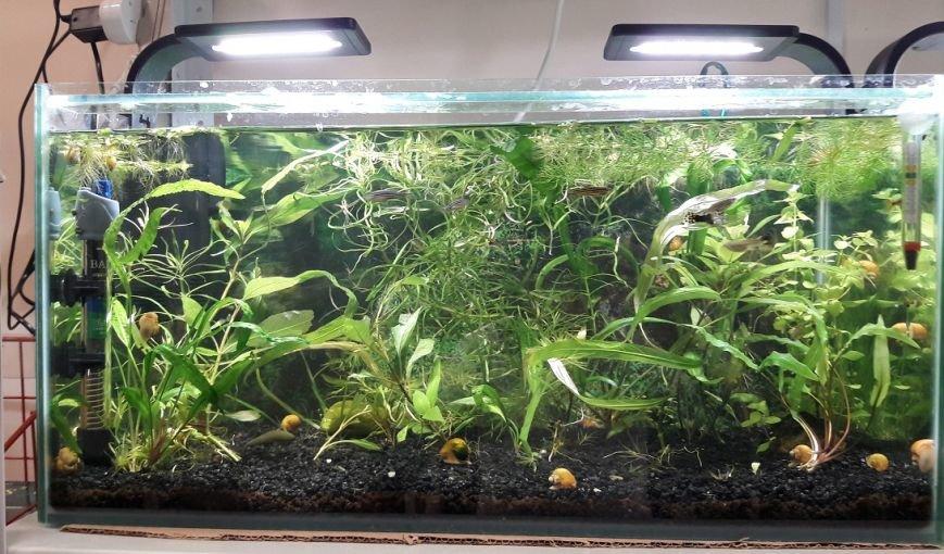 Эксклюзивные рыбки по выгодным ценам и бонусная программа: магазин «Зоомир» в Полоцке приглашает в мир аквариумистики, фото-3