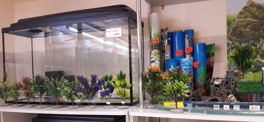 Эксклюзивные рыбки по выгодным ценам и бонусная программа: магазин «Зоомир» в Полоцке приглашает в мир аквариумистики, фото-2