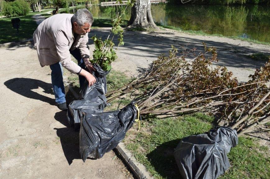 В Симферопольском парке имени Гагарина провели субботник и высадили деревья (ФОТО), фото-1