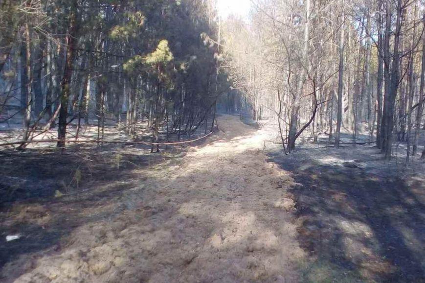 В Черниговской области горело 2,5 гектара леса, фото-3