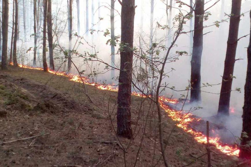 В Черниговской области горело 2,5 гектара леса, фото-2