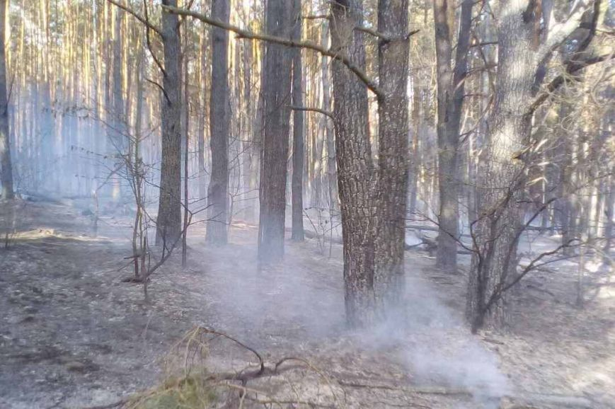 В Черниговской области горело 2,5 гектара леса, фото-1