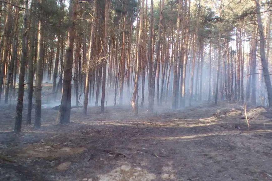 В Черниговской области горело 2,5 гектара леса, фото-4