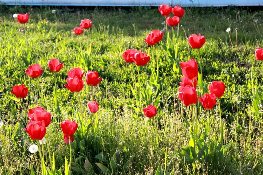 Мариупольцы отметили 1 мая: с шашлыком, украинскими флагами и советскими песнями (ФОТО), фото-38
