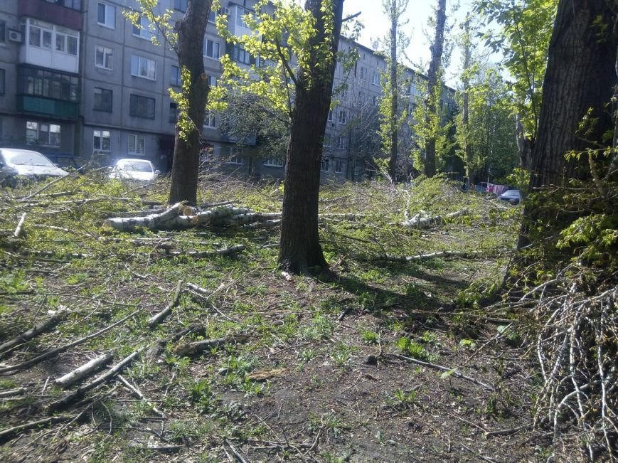 Спилить - спилили, а убрать забыли: в Покровске продолжается масштабная опиловка, фото-6