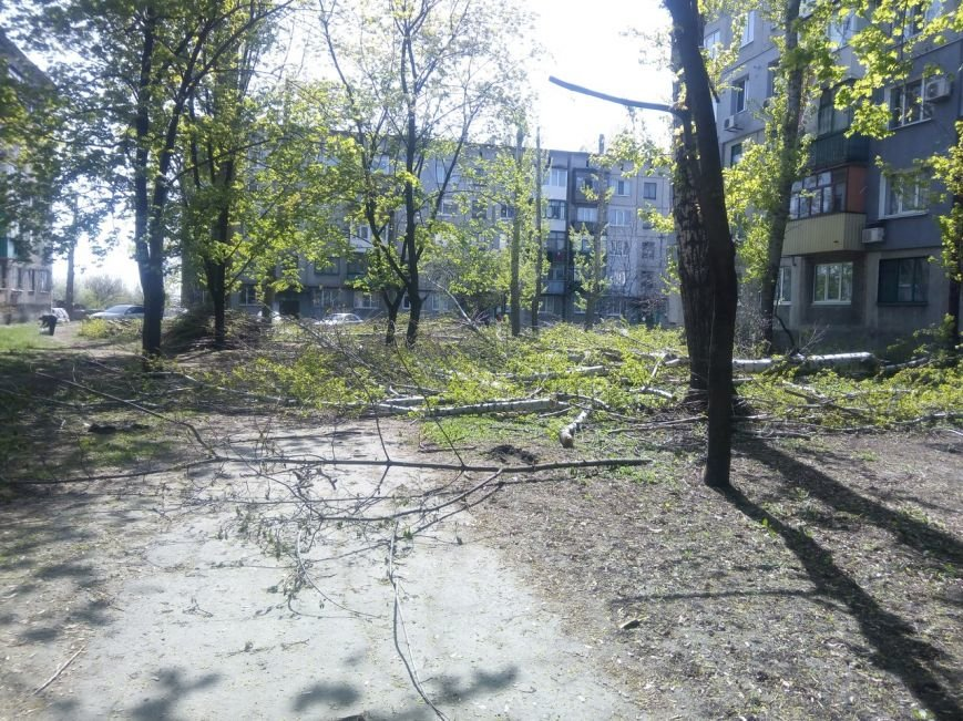 Спилить - спилили, а убрать забыли: в Покровске продолжается масштабная опиловка, фото-4
