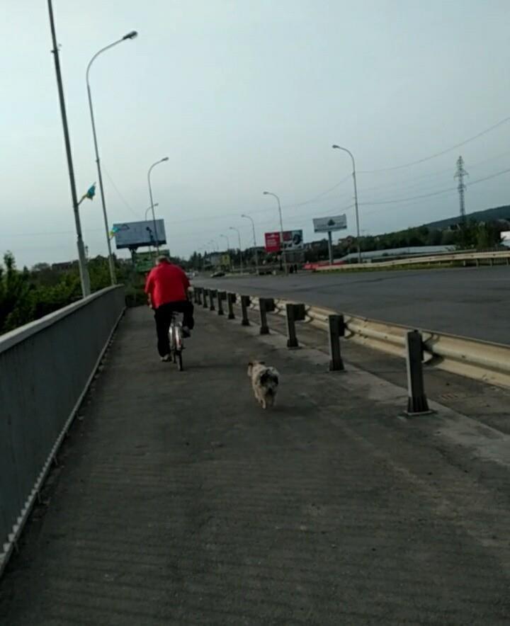 """""""Барбос"""" показав фото чоловіка, який викинув кошенят з моста у річку Уж, фото-3"""