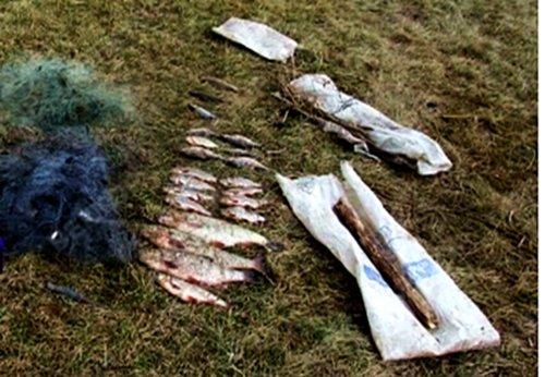 53-летний полочанин ловил рыбу сетями в Двине. Теперь ему придется возмещать ущерб в 3 тысячи рублей, фото-1