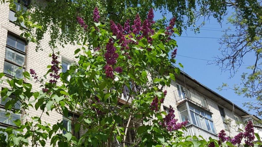 Новомосковск 0569 сир 2