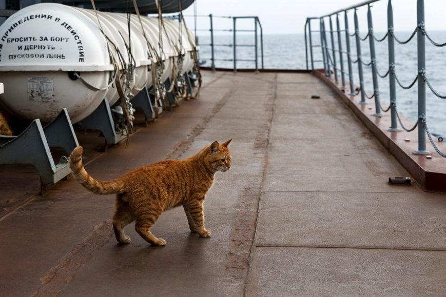 Севастопольский кот вместе с российскими кораблями ходил к берегам Сирии (ФОТО), фото-3