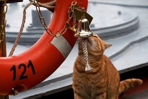 Севастопольский кот вместе с российскими кораблями ходил к берегам Сирии (ФОТО), фото-2