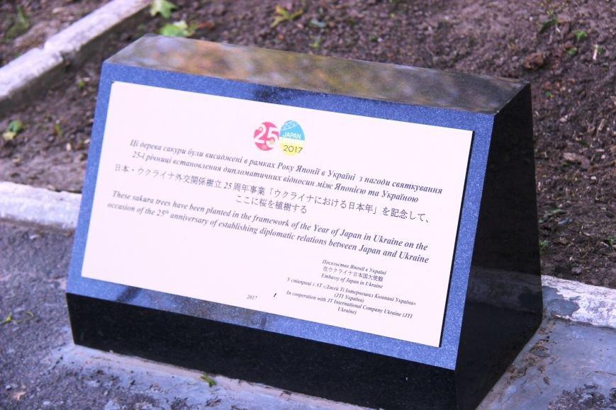В центре Херсона зацвели сакуры (фото), фото-5
