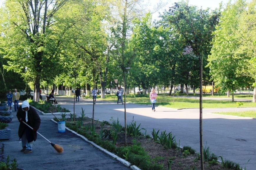 В центре Херсона зацвели сакуры (фото), фото-4