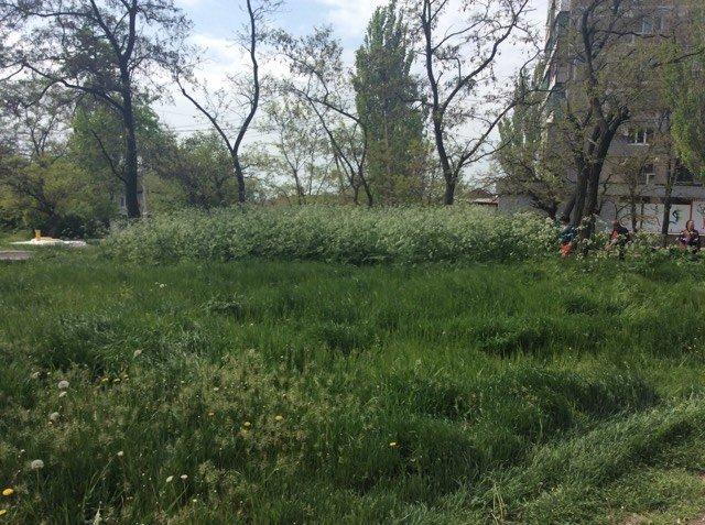 В Мариуполе будут наказывать за травостой более 10 сантиметров (ФОТО), фото-3