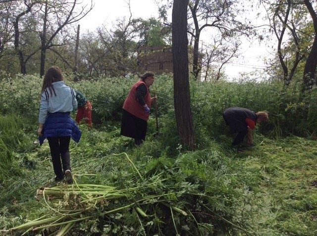 В Мариуполе будут наказывать за травостой более 10 сантиметров (ФОТО), фото-4