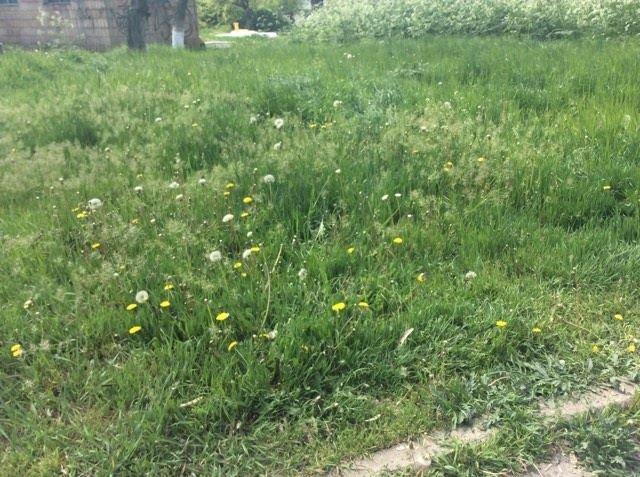 В Мариуполе будут наказывать за травостой более 10 сантиметров (ФОТО), фото-2