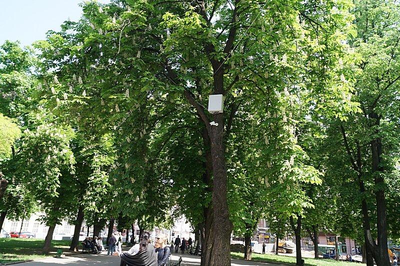Э — экономия: в Одессе видеокамеры прикрутили прямо к деревьям (ФОТОФАКТ), фото-1