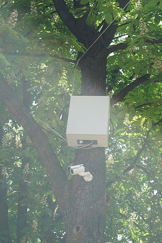 Э — экономия: в Одессе видеокамеры прикрутили прямо к деревьям (ФОТОФАКТ), фото-4