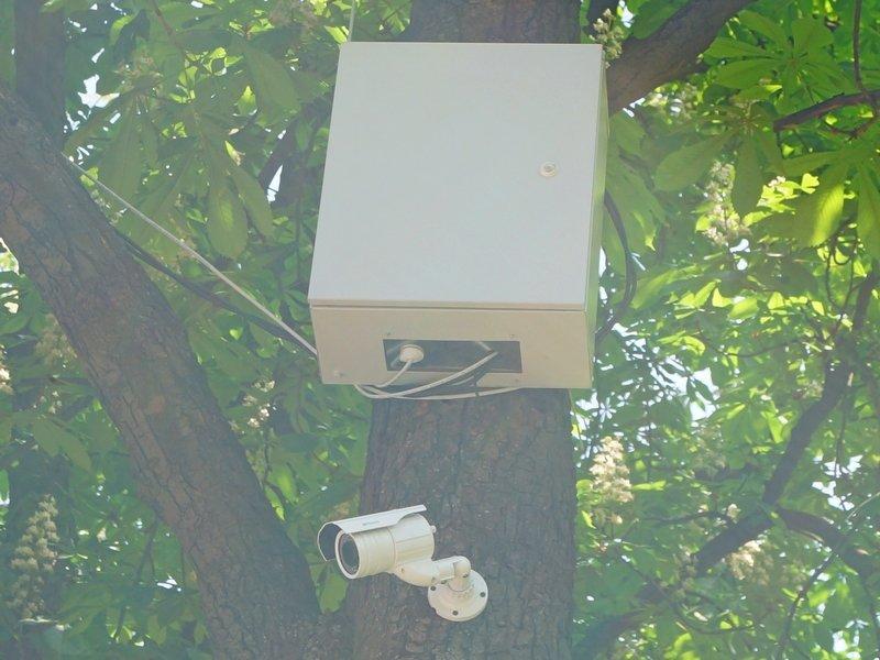 Э — экономия: в Одессе видеокамеры прикрутили прямо к деревьям (ФОТОФАКТ), фото-3