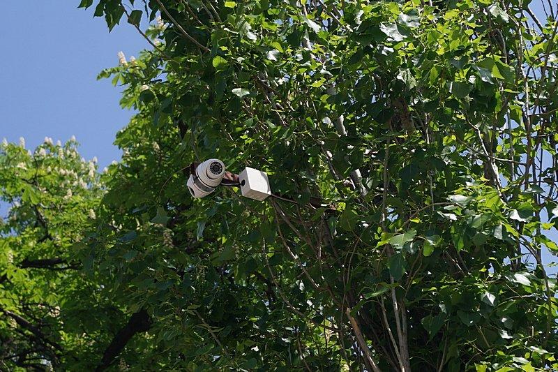 Э — экономия: в Одессе видеокамеры прикрутили прямо к деревьям (ФОТОФАКТ), фото-2