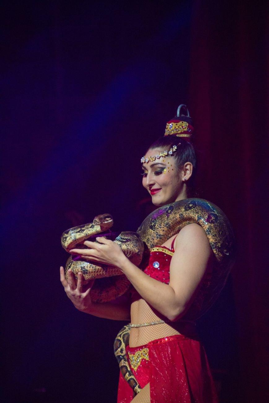 Всемирно известный цирк «Кобзов» опять порадует жителей Покровска незабываемым шоу мирового уровня «Цирк Италии»!, фото-1