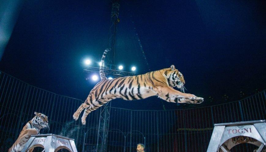 Всемирно известный цирк «Кобзов» опять порадует жителей Покровска незабываемым шоу мирового уровня «Цирк Италии»!, фото-3