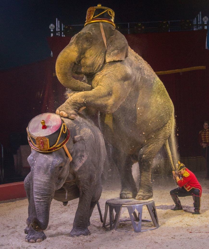 Всемирно известный цирк «Кобзов» опять порадует жителей Покровска незабываемым шоу мирового уровня «Цирк Италии»!, фото-10