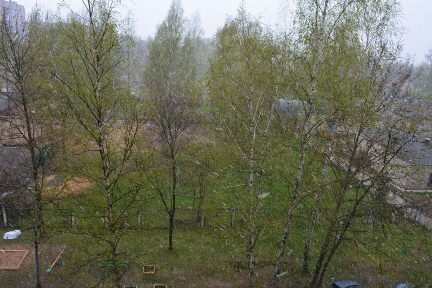 Странная весна. Майские снежинки в Полоцке и Новополоцке – фотофакт, фото-1