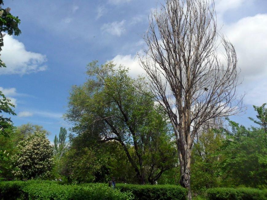 """Аварийные деревья в Никополе: как бороться с """"опасными соседями""""?, фото-3"""