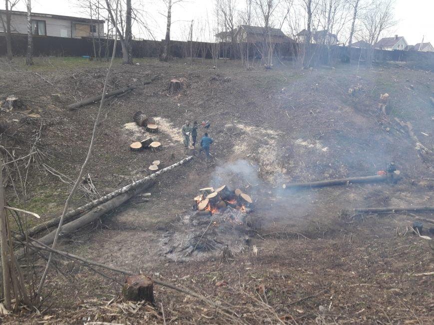 В Домодедово сжигали порубочные остатки в неположенном месте, фото-1