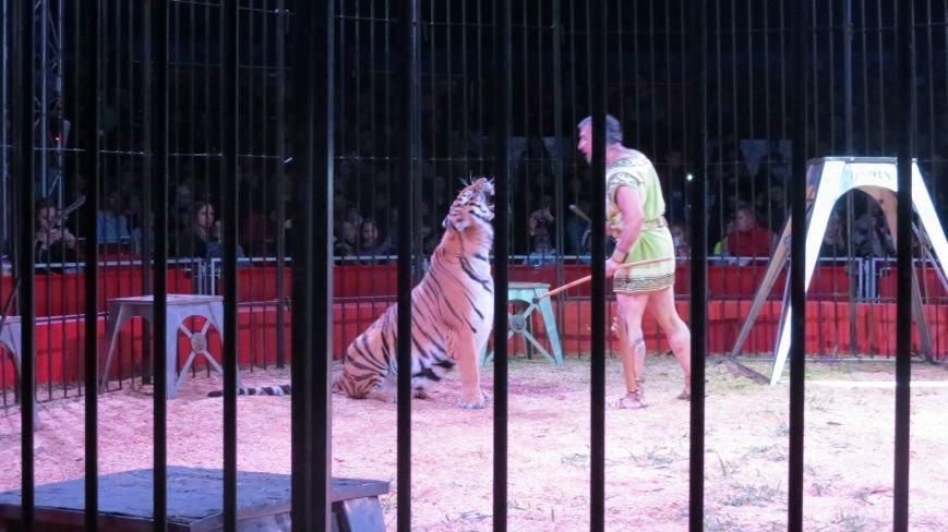 Италия приехала в Покровск: всемирно известный цирк «Кобзов» подарил горожанам 2 часа незабываемых эмоций, фото-22