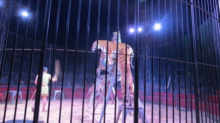 Италия приехала в Покровск: всемирно известный цирк «Кобзов» подарил горожанам 2 часа незабываемых эмоций, фото-20