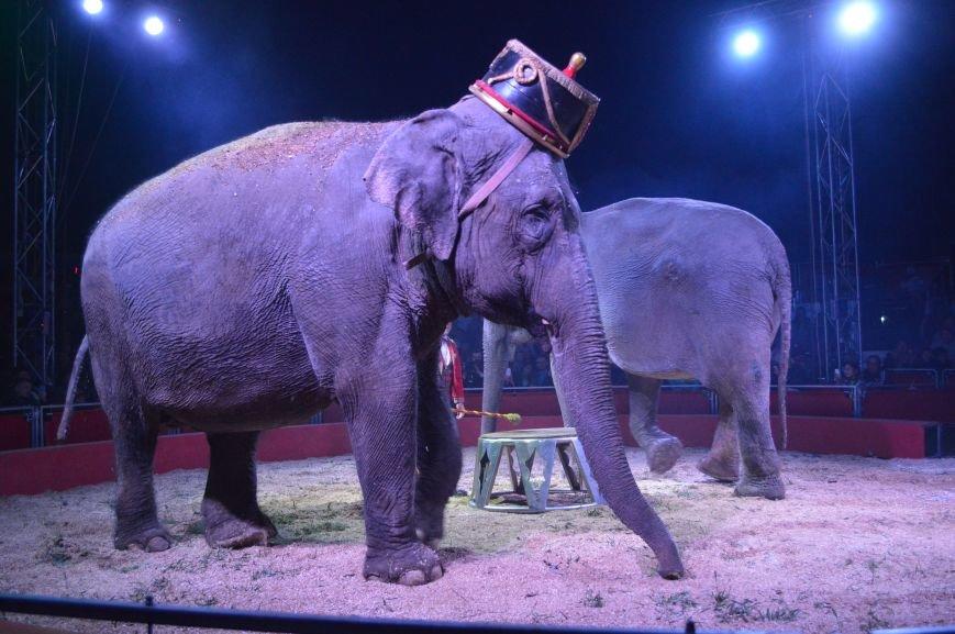 Италия приехала в Покровск: всемирно известный цирк «Кобзов» подарил горожанам 2 часа незабываемых эмоций, фото-25