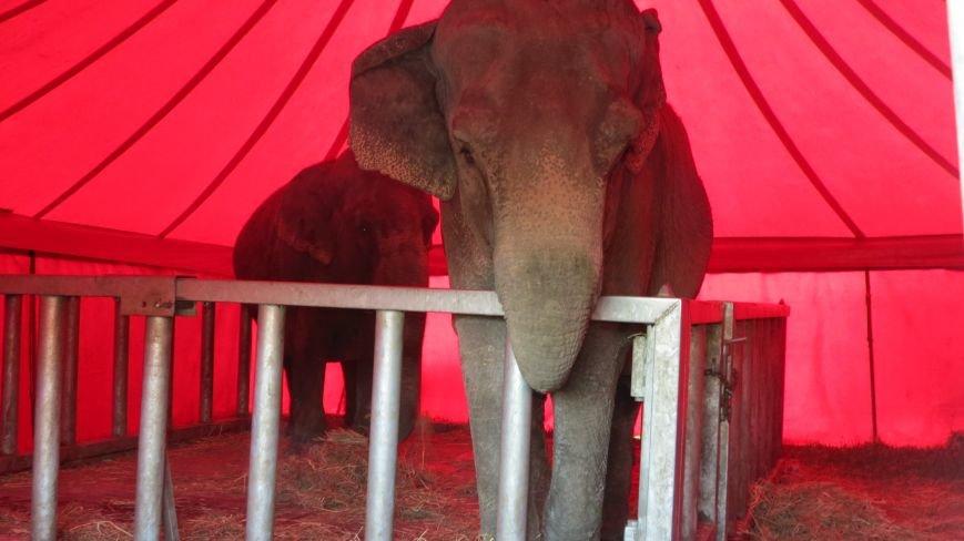 Италия приехала в Покровск: всемирно известный цирк «Кобзов» подарил горожанам 2 часа незабываемых эмоций, фото-12