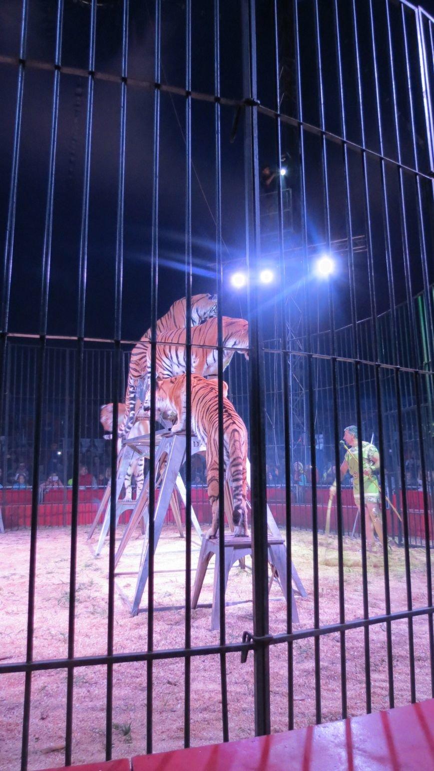 Италия приехала в Покровск: всемирно известный цирк «Кобзов» подарил горожанам 2 часа незабываемых эмоций, фото-18