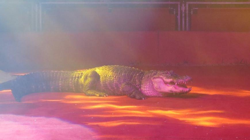 Италия приехала в Покровск: всемирно известный цирк «Кобзов» подарил горожанам 2 часа незабываемых эмоций, фото-34