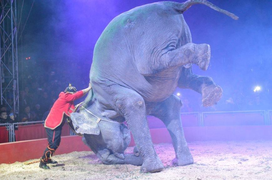 Италия приехала в Покровск: всемирно известный цирк «Кобзов» подарил горожанам 2 часа незабываемых эмоций, фото-23