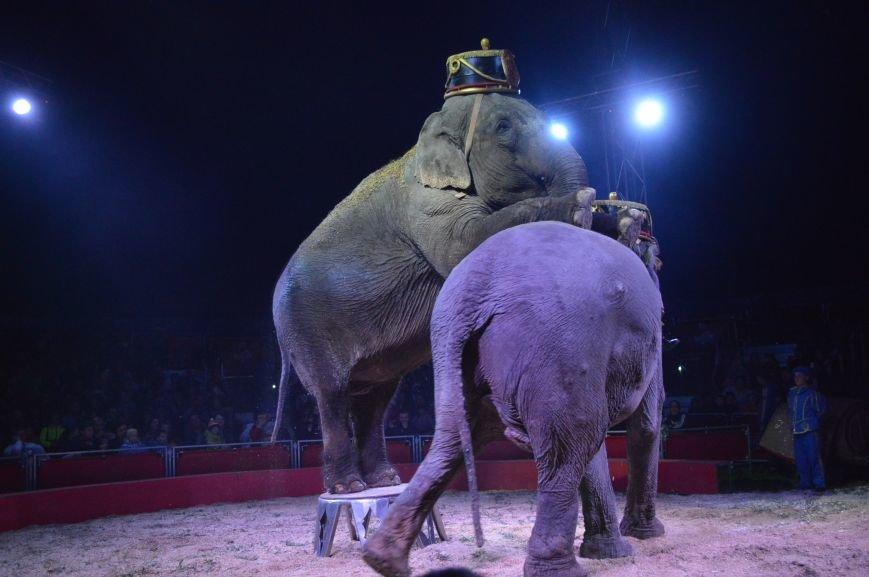Италия приехала в Покровск: всемирно известный цирк «Кобзов» подарил горожанам 2 часа незабываемых эмоций, фото-24