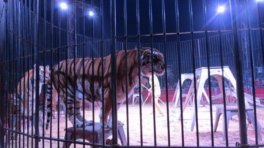 Италия приехала в Покровск: всемирно известный цирк «Кобзов» подарил горожанам 2 часа незабываемых эмоций, фото-19
