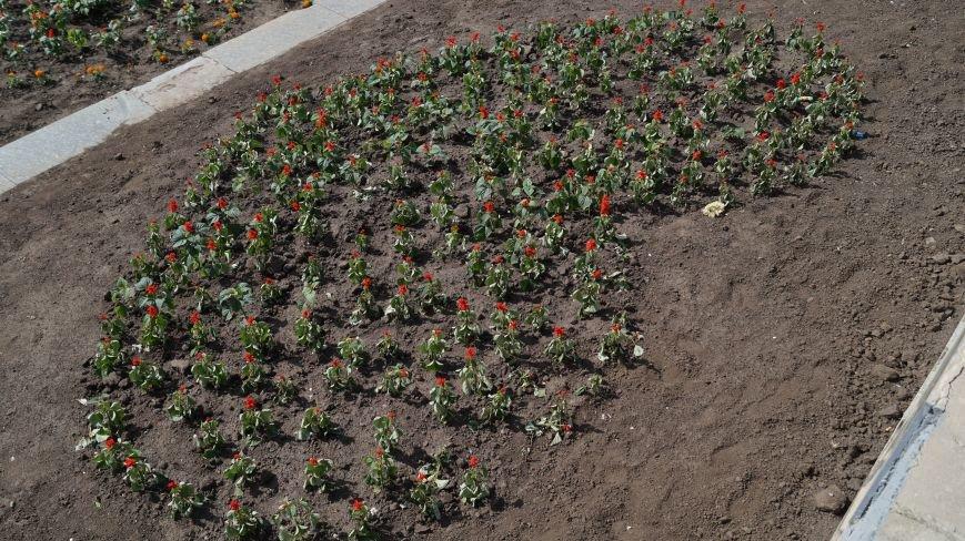 На Соборной площади высадили цветы в виде герба, сердца и флага, фото-2
