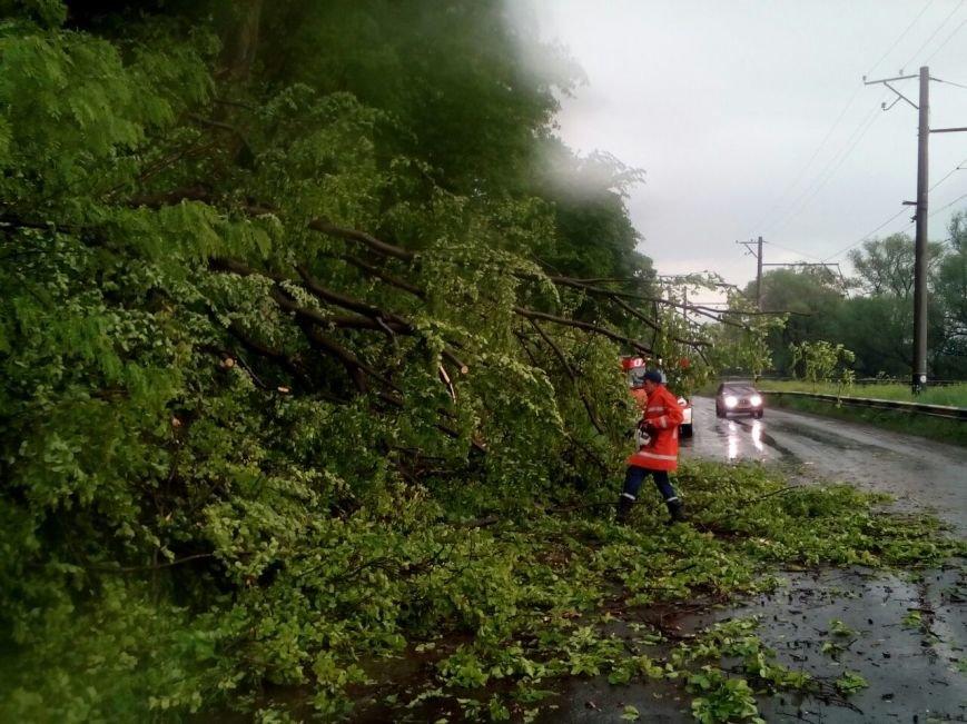 Наслідки непогоди - у Хусті шквальний вітер повалив дерево на дорогу, внаслідок чого придавило дві машини: фото, фото-1