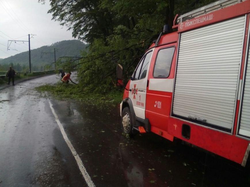 Наслідки непогоди - у Хусті шквальний вітер повалив дерево на дорогу, внаслідок чого придавило дві машини: фото, фото-2
