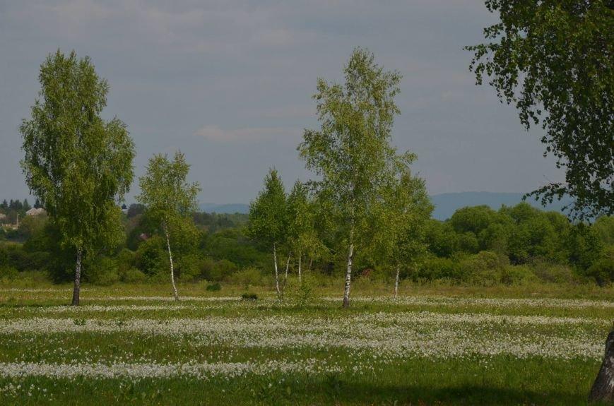 У мережі поділились неймовірними фото квітучої Долини нарцисів, фото-3
