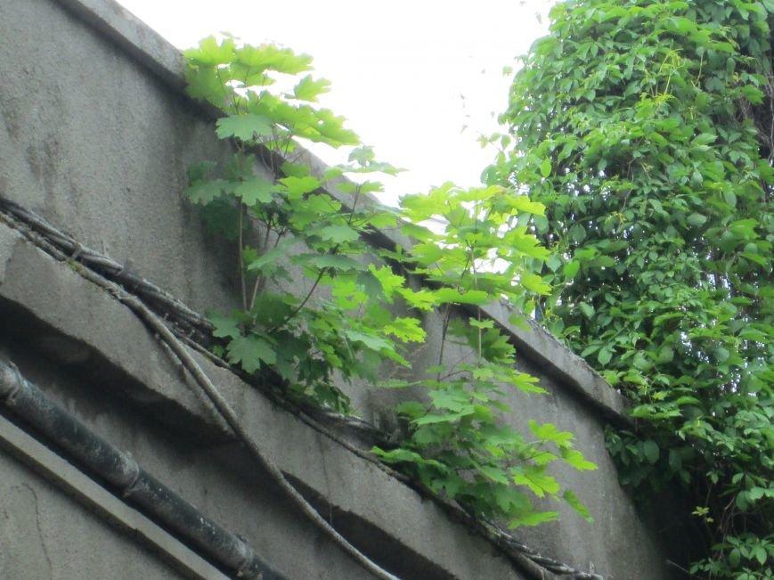 Дерево, которое смогло: На одесском мосту появилась лишняя флора (ФОТО), фото-1