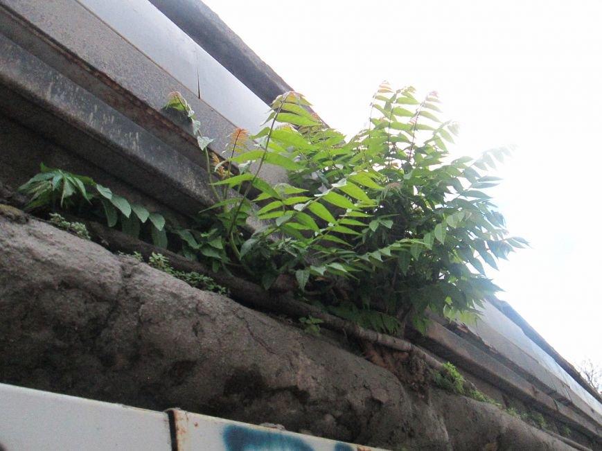 Дерево, которое смогло: На одесском мосту появилась лишняя флора (ФОТО), фото-12