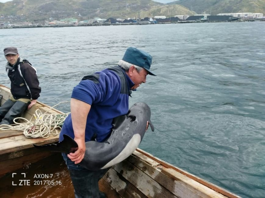 На Сахалине сотрудники МЧС России спасли дельфина, фото-1