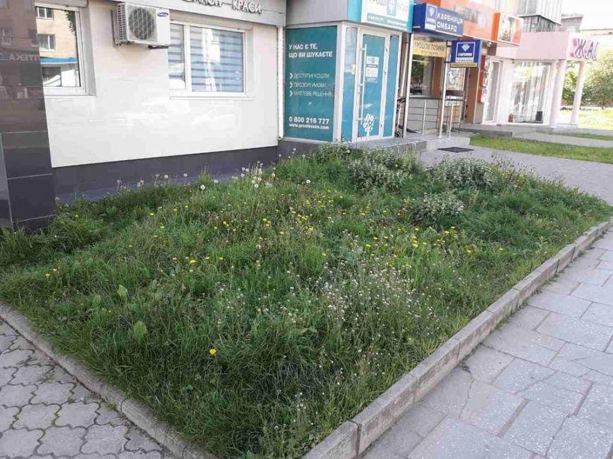 Луцьк: місто заросло травою (ФОТО), фото-4