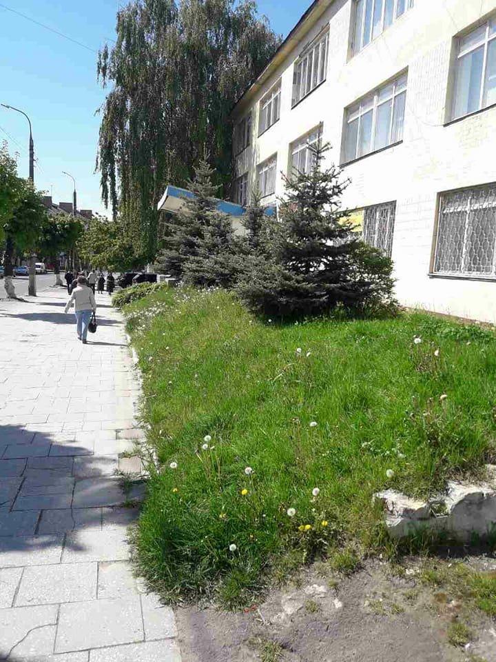 Луцьк: місто заросло травою (ФОТО), фото-7