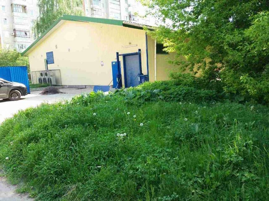 Луцьк: місто заросло травою (ФОТО), фото-2